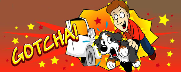 The White Van - Ripley the Dog