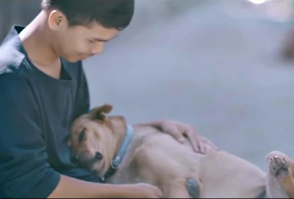 stray dog falling asleep in his arms