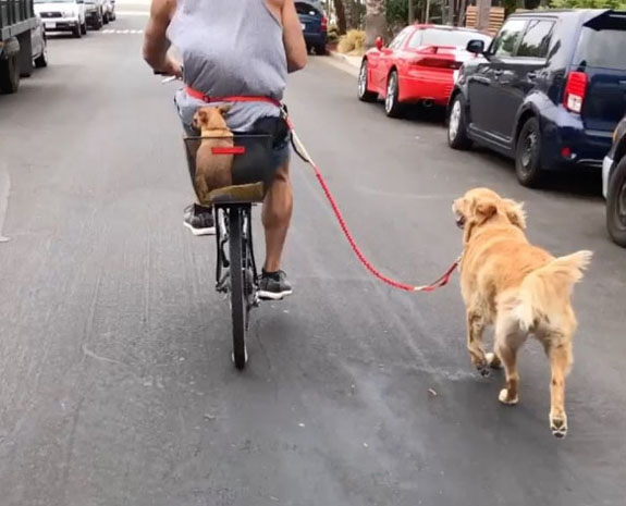 lee taking his dogs for a ride/run