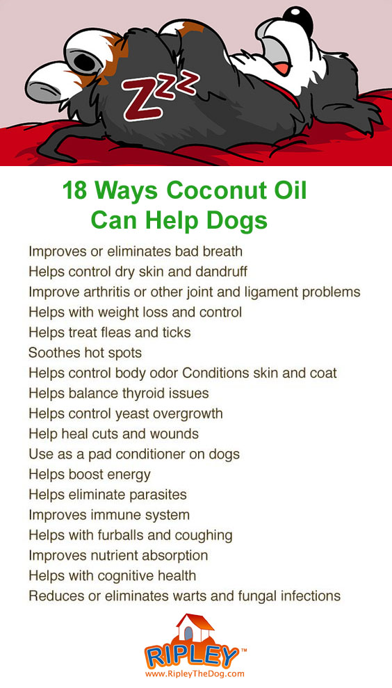 dogs and coconut oil