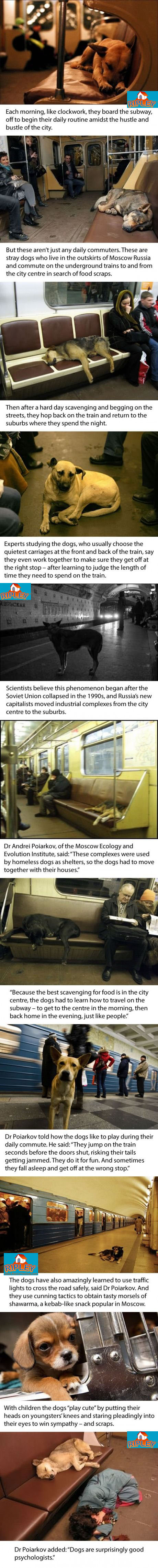 dogs on moscow suway