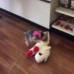 Little Dog Big Plush Toy