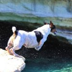Cliff Diving Dog