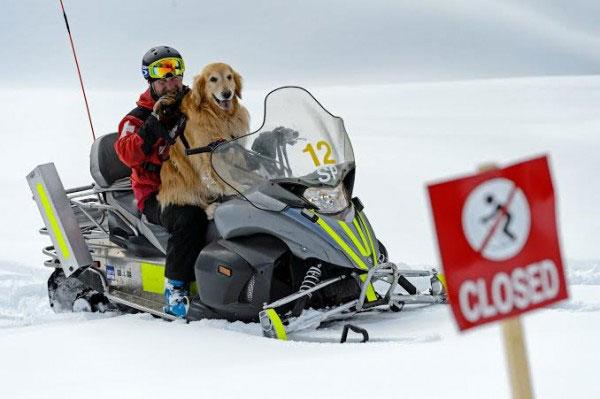 henry the ski patrol dog