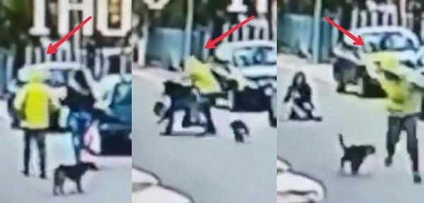 stray dog saves woman