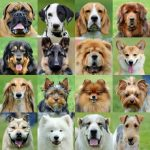 Complete Rankings Of The Most Popular Dog Breeds