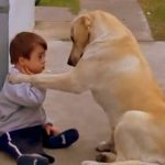 A Down Syndrome Boy And A Dog