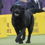 The 30 Most Popular Dog Breeds in the US