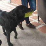 Dog Always Brings A Leaf To Buy Himself Treats