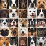 Which Dog Breed Is For You