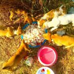 Michael Feeds 80 Street Dogs A Day