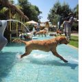 water park for dogs