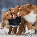 top dog photos of 2018