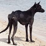 Man On Cruise Finds Dog Stranded On Deserted Island