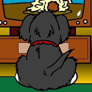 stomach ache ripley the dog