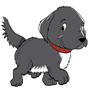 evolution of Bon the shelter dog