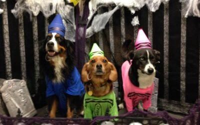Estate Planning Pet Owner Edition