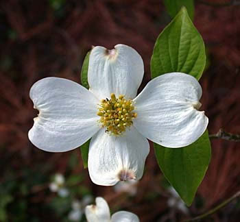 Close up photo of a white flower