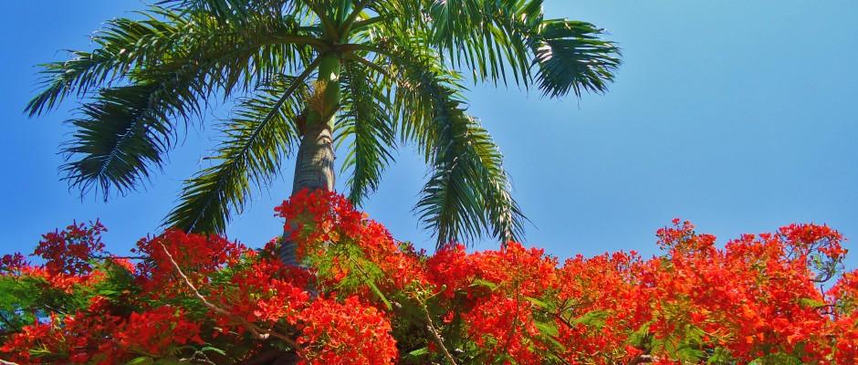 Palm tree in Playa Del Carmen