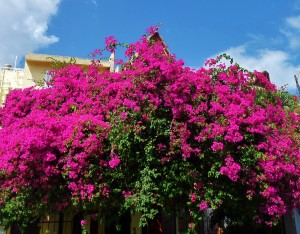 house flowers playa del carmen mexico