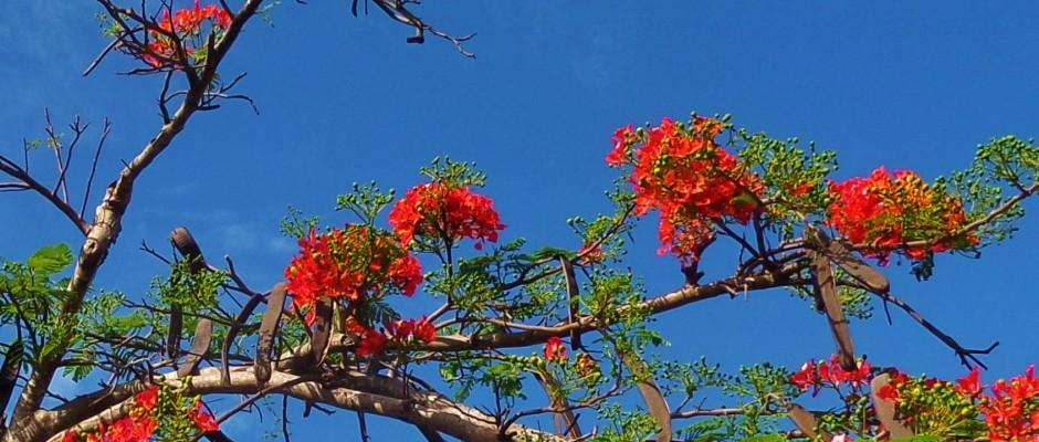 Flowers, trees playa del carmen