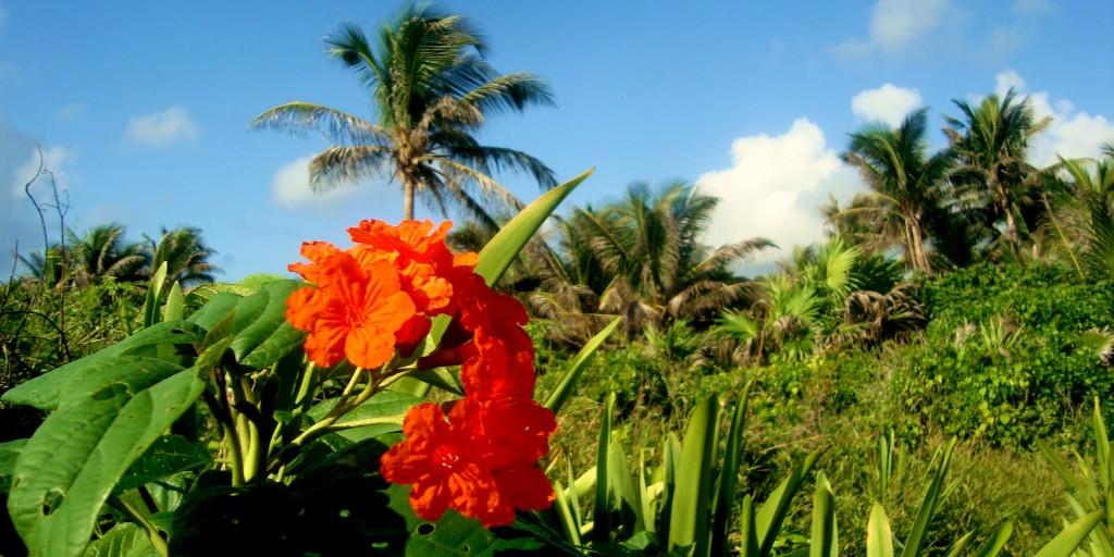 Flowers, Playa Del Carmen