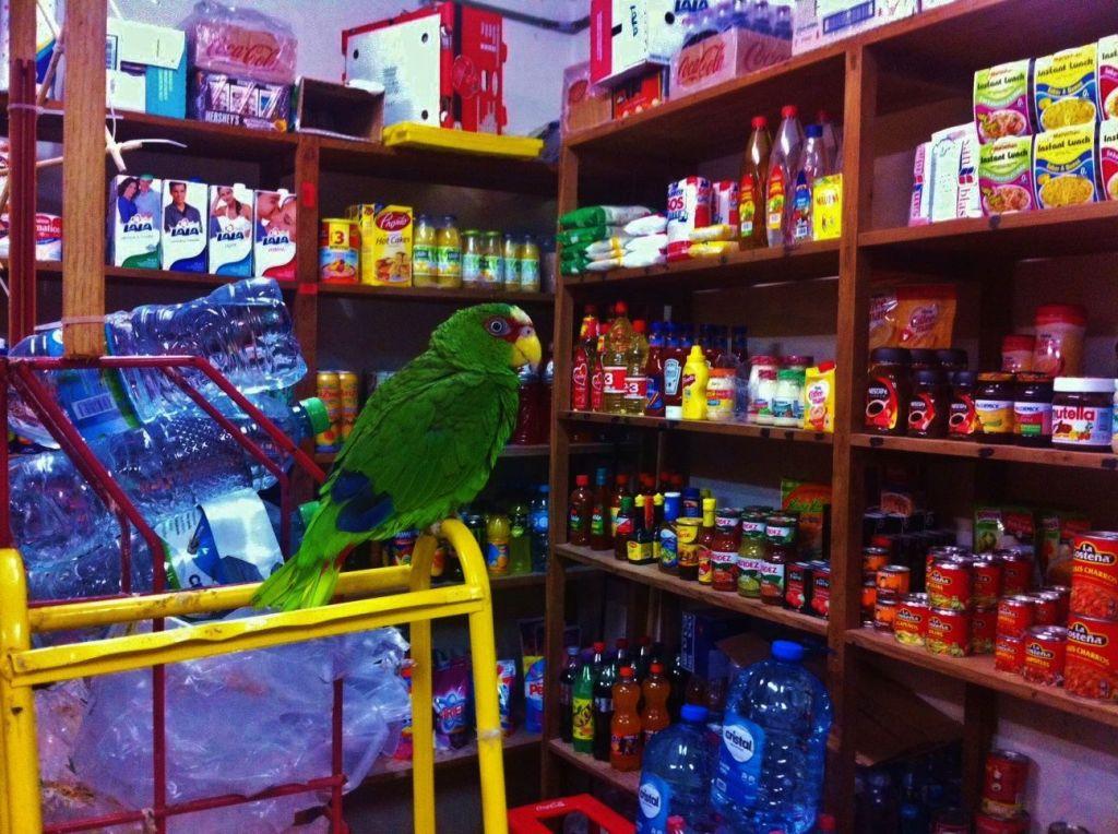 Bird in store in Playa Del Carmen