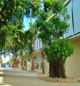 Playa Del Carmen trees next to Quinta Alegria