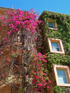 building covered in vines in Playa Del Carmen
