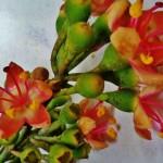 Ceiba Tree Flower