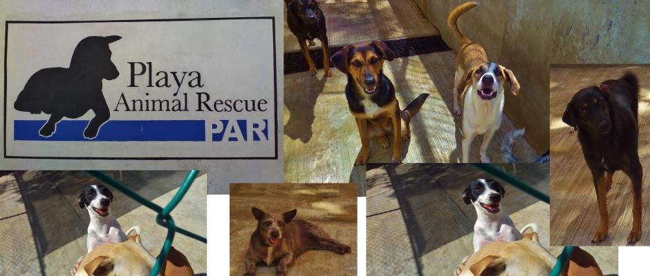 Playa Animal Rescue in Playa Del Carmen