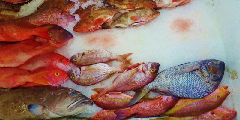 Fresh caught fish at the market.