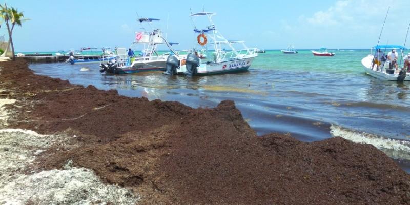 seaweed on the beach in the Riviera Maya