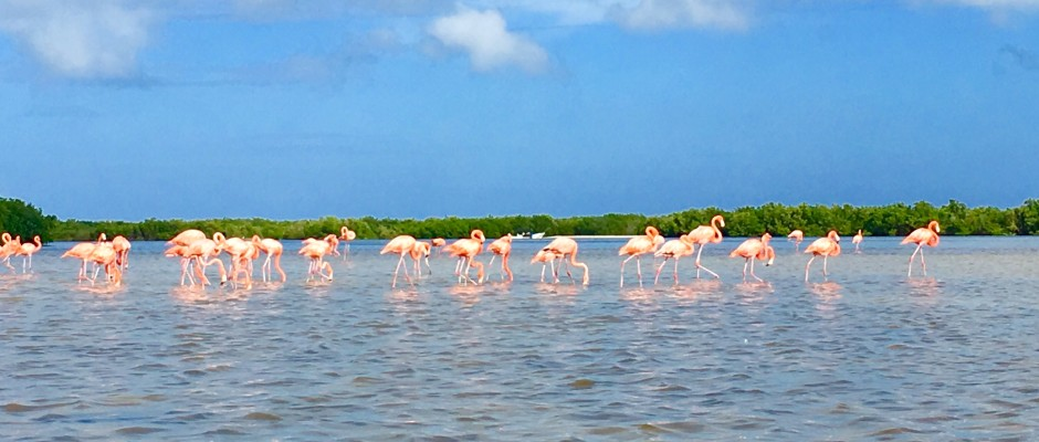 Rio Lagartos Yucatan Mexico