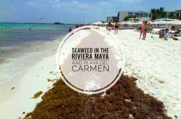 Seaweed Riviera Maya Playa Del Carmen