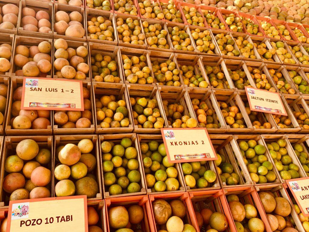 Oranges in Oxkutzcab