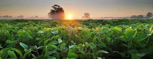 Wholesale Organic Fertilizers