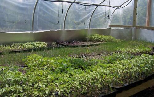 greenhouses3