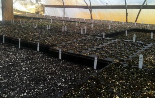 greenhouses5