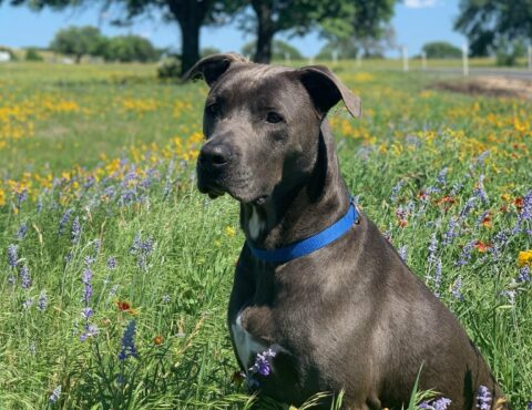 San Antonio dog trainer San Antonio dog boarding San Antonio dog training San Antonio doggy daycare San Antonio dog obedience classes