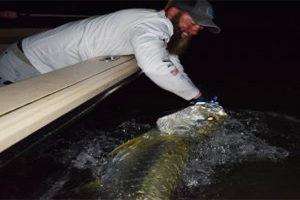 Punta Gorda Florida tarpon caught by Chris Fanelli