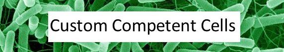 Custom Competent Cells