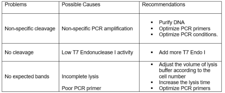T7 Endonuclease I Troubleshooting