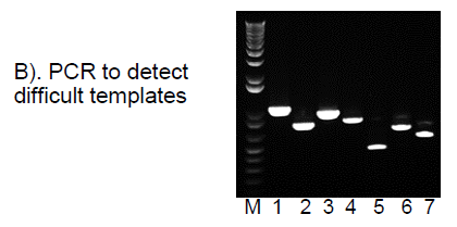 High-Fidelity-DNA-Polymerase-PCR-Difficult-Templates