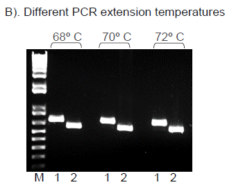 Hot Start High Fidelity DNA Polymerase I7 PCR Extension Temperatures
