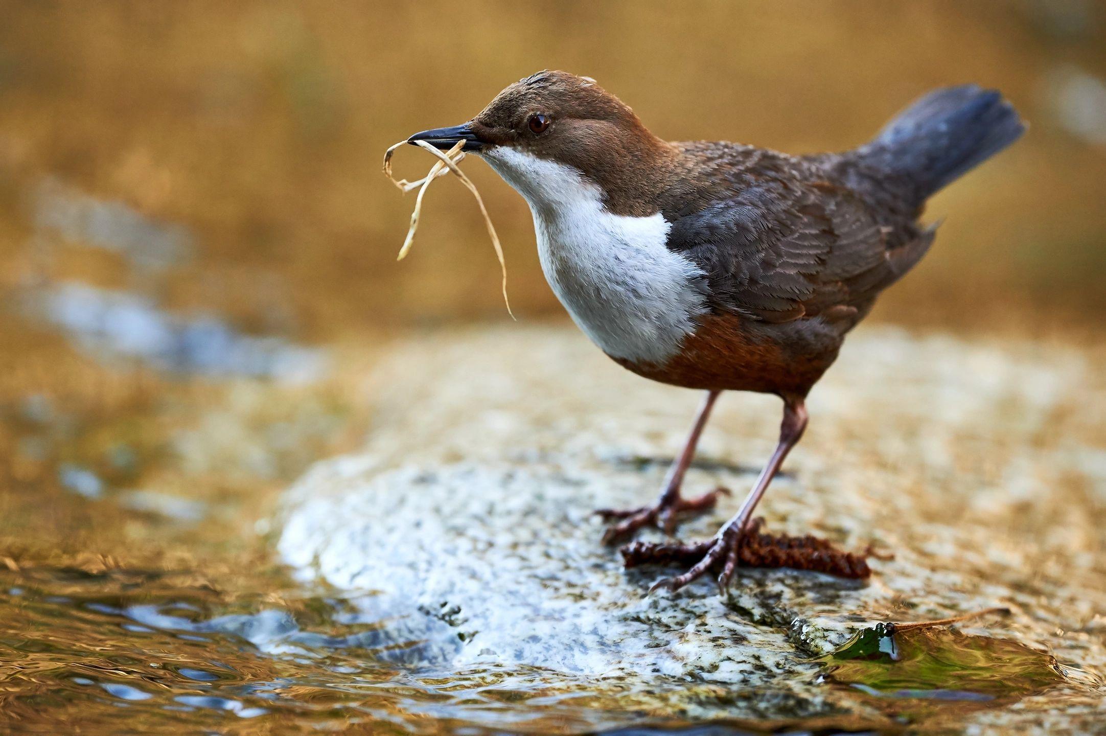 Sacred Earth Council Little Bird