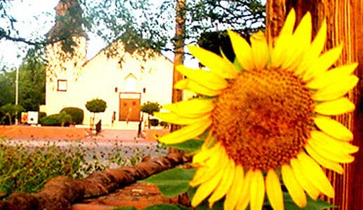 3rd Annual Tubac Van Gogh Sunflower Paint Out, Auction