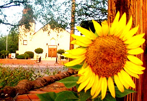 Sunflower Paint-Out 2018 Tubac