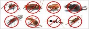 شركة مكافحة حشرات بالعديد