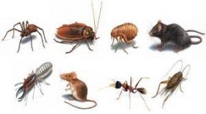 pests-insects-